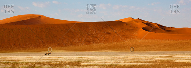 An Oryx and high sand dunes in the Namib-Naukluft National Park