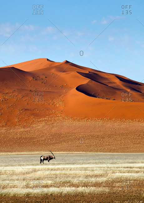 An Oryx and high sand dunes in the Namib-Naukluft National Parkna