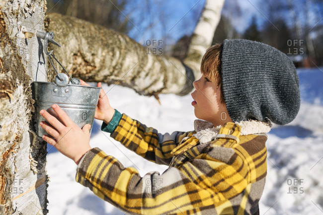 Young boy tapping a tree for syrup