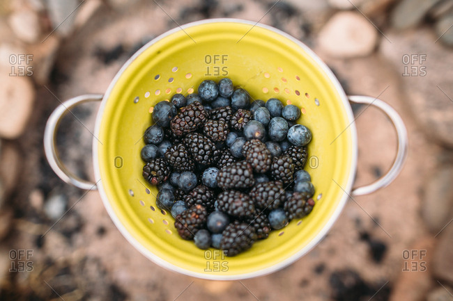 Colander full of fresh blueberries and blackberries