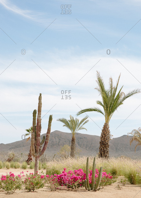 Desert garden with palm tree, cacti, and flowering plants