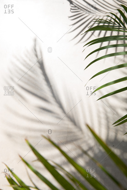 Palm leaves and shadow on wall