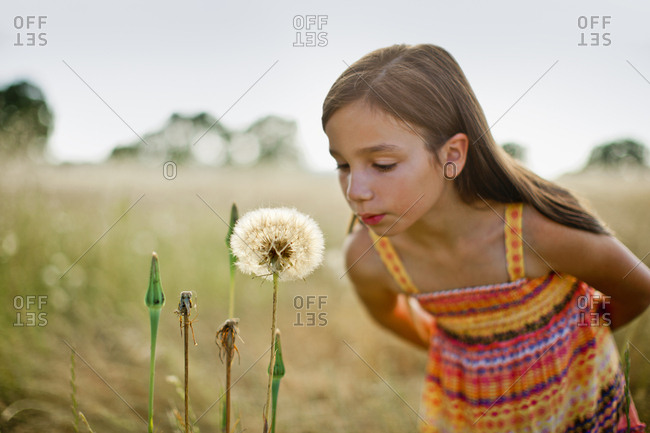 Young girl blowing on a dandelion seed head