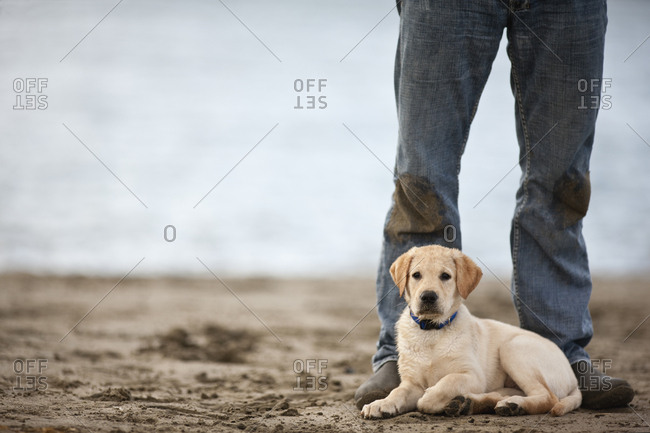 Puppy on beach, lying at owner's feet