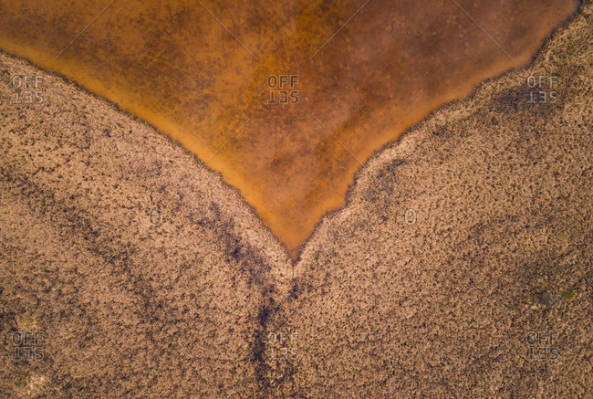 Abstract aerial view of golden color Valgjarv lake and swamp area surrounding it, Estonia
