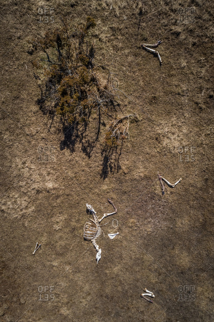 Aerial view of animal skeleton on the beach on the island of Vormsi, Estonia