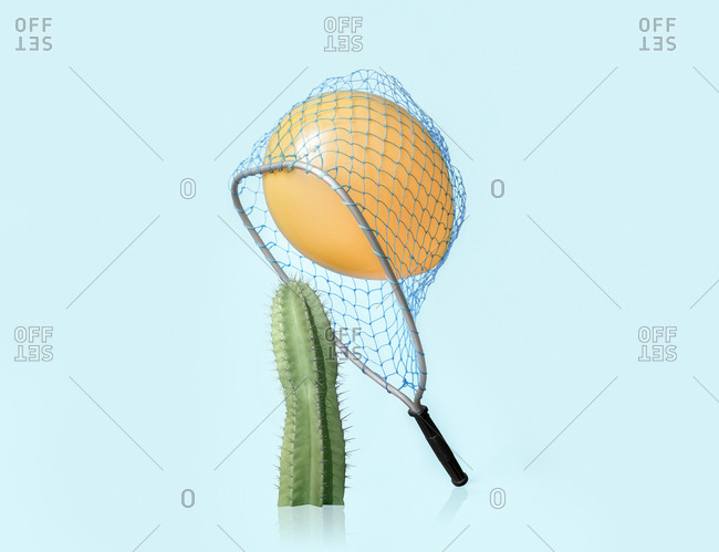 Balloon trapped in net about to come in contact with spiny cactus