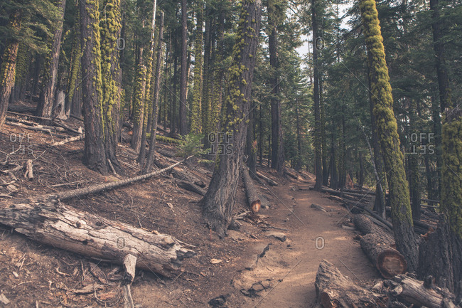 Hiking trail through forest in mountain wilderness area
