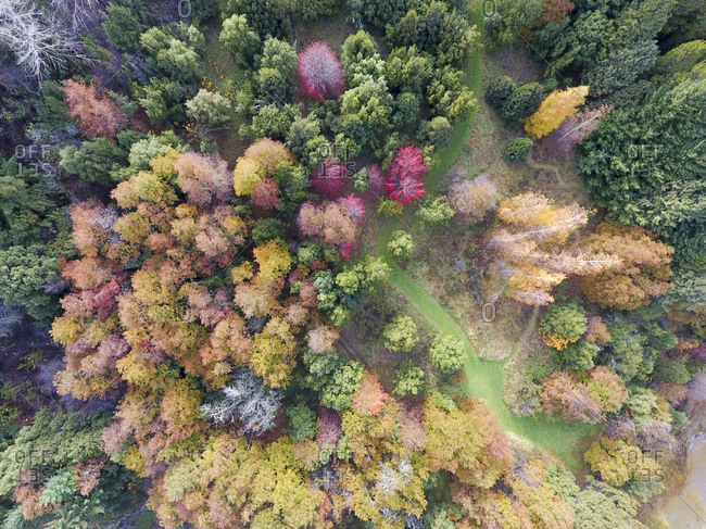 Aerial view of bold forest leaves changing colors in South American wilderness