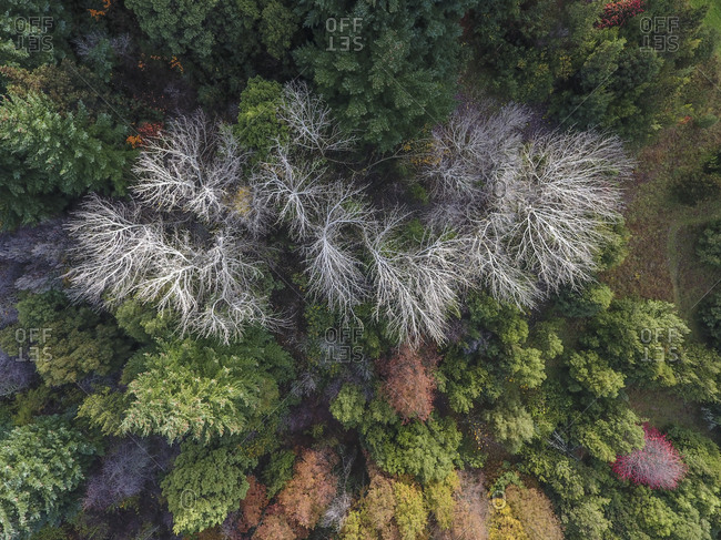 Lush mountain forest in the fall from above