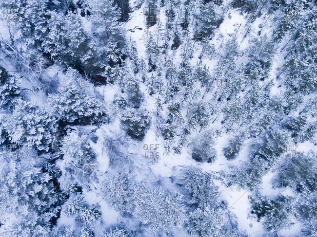 Drone view of snowy woods in the early evening