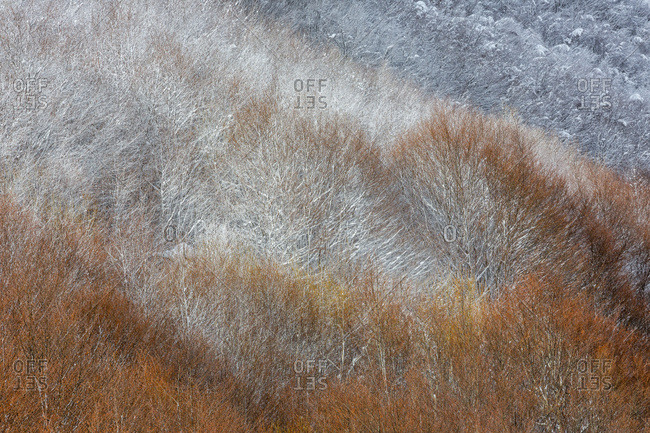 Detail of autumnal snowy forest in the Gran Sasso and monti della Laga national park, Campotosto lake, Abruzzo, Italy