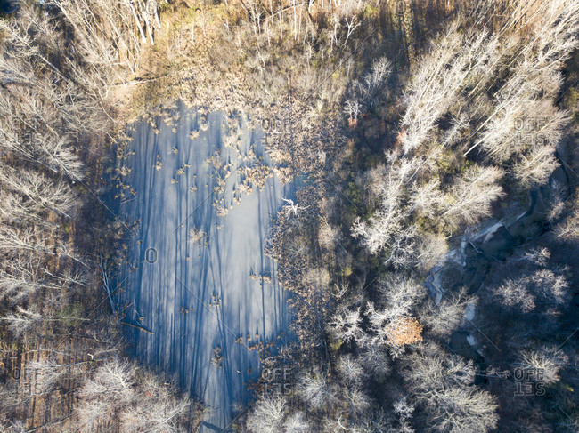 Drone view of a frozen Vermont forest swamp in autumn