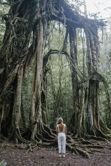 Rear view of woman looking at roots of a banyan tree