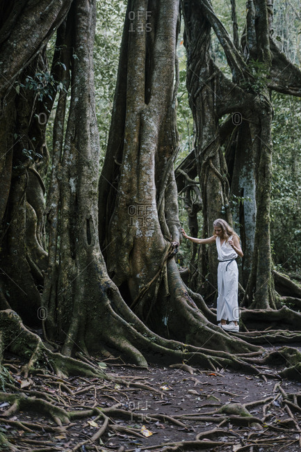 Blonde woman walking on roots of a banyan tree