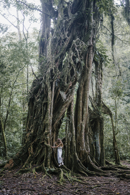 Woman walking on roots of a banyan tree
