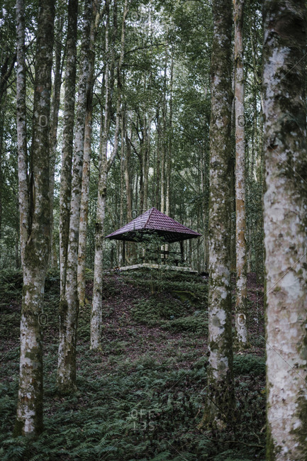 Small shelter in a forest in Bali