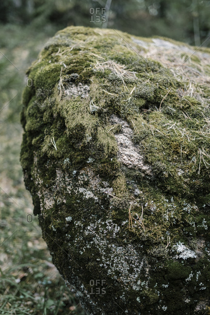 Close up of a mossy rock formation