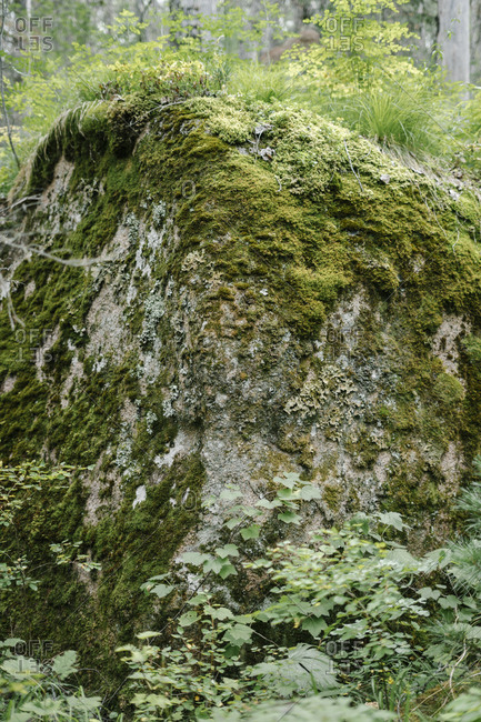 Close up of a moss covered rock formation