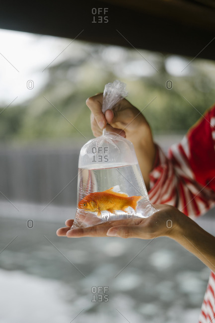 Hands holding plastic bag with goldfish