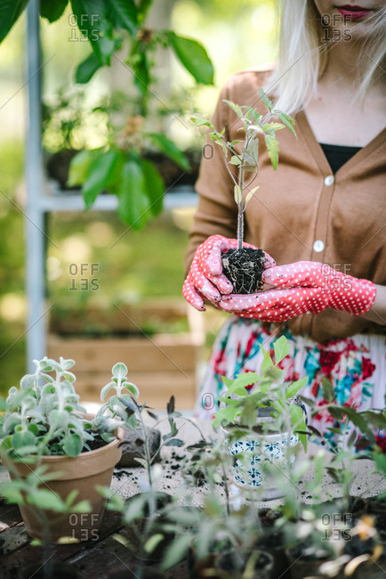 Woman tending to young plant in greenhouse