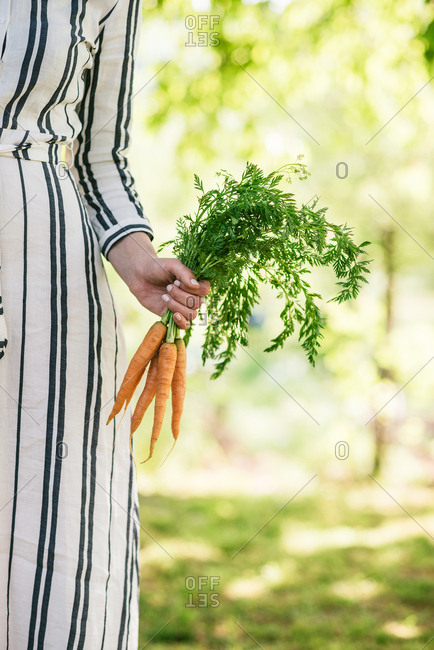 Front view of woman's arm holding up carrots in summery garden