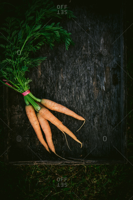 Top down view of bunch of carrots with their stems outside in the yard