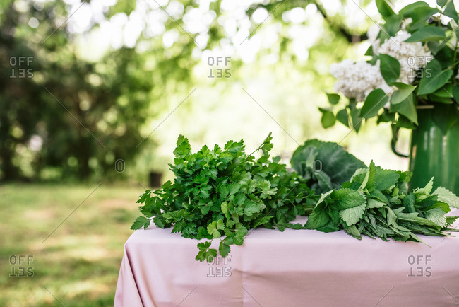 Bunches of fresh picked mint, parsley and lilacs adorning a table in the garden