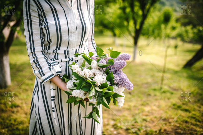 Close up of woman in striped dress in spring garden holding fresh picked hydrangeas