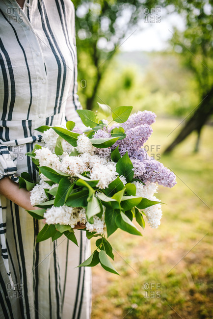 Details of woman in striped dress in garden holding fresh picked hydrangea flowers