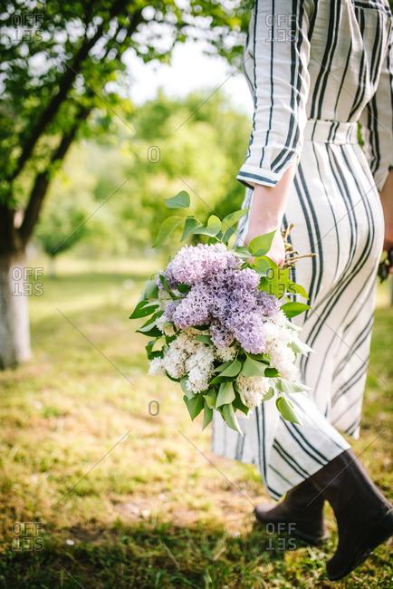 Rearview of woman in striped dress walking in garden carrying fresh picked hydrangeas