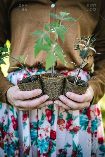 Close up of woman holding three young plants ready for replanting in garden