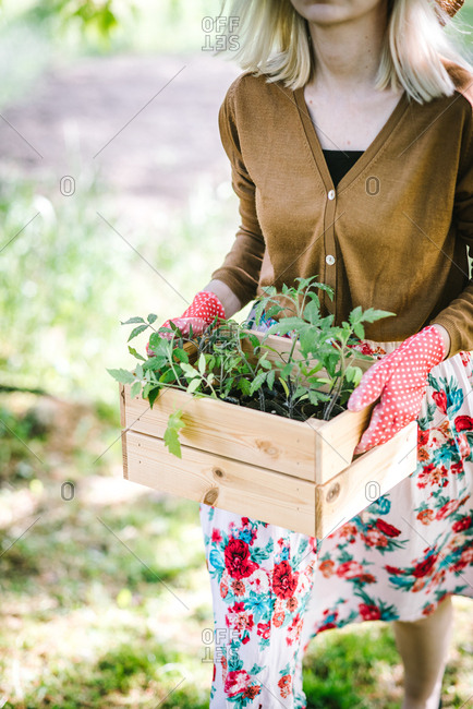 Woman in flowery dress carrying box of young plants ready for replanting in garden