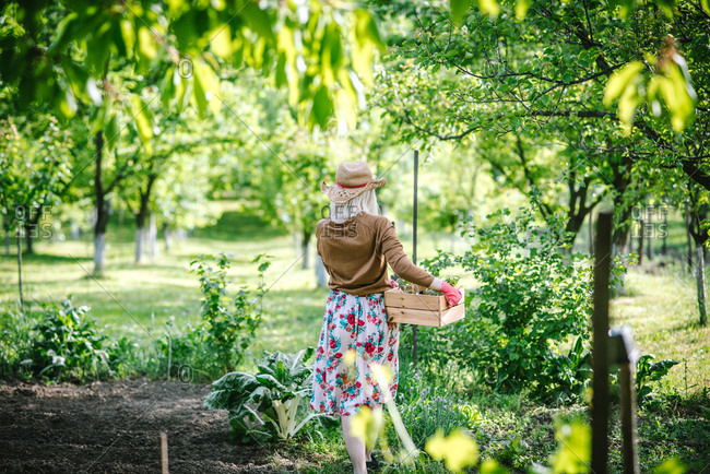 Rearview of woman walking in garden carrying wooden box of young plants to replant
