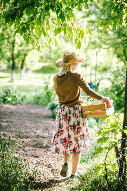 View from behind of woman in garden carrying wooden box of young plants to replant