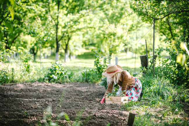 Woman in flowery dress kneeling in garden replanting some seedlings