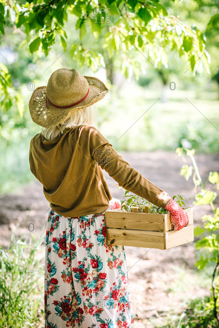 Rearview of woman carrying wooden crate of young plants standing looking out at garden