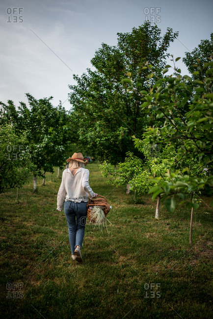 Rearview of woman walking through orchard carrying basket after packing up picnic