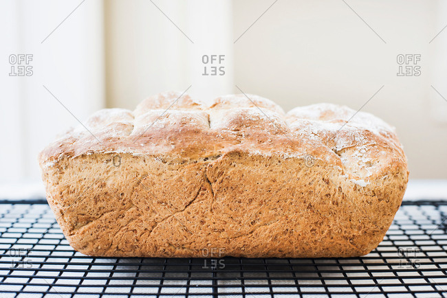 Freshly baked loaf of whole wheat bread on cooling rack
