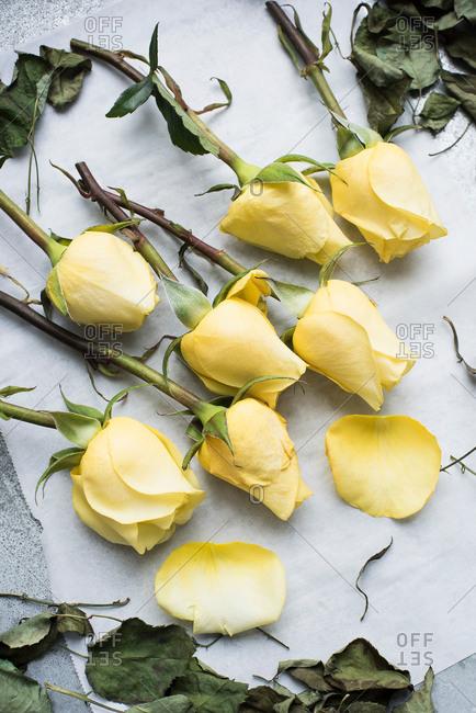 Stalks of rose on table