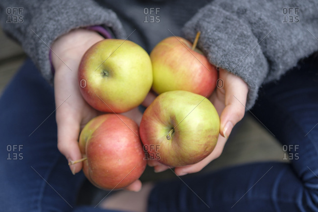 hands holding four apples close up stock photo offset