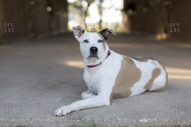 Dog relaxing on outdoor workshop floor