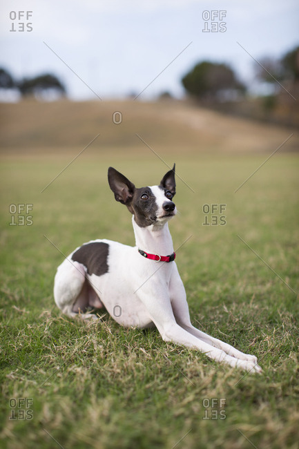 Slim dog sitting alone in farm field