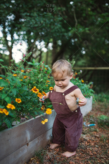 Little boy in his backyard wondering what flowers are