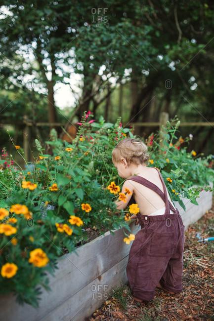 Little boy doing some gardening in mummy's flower beds in back yard