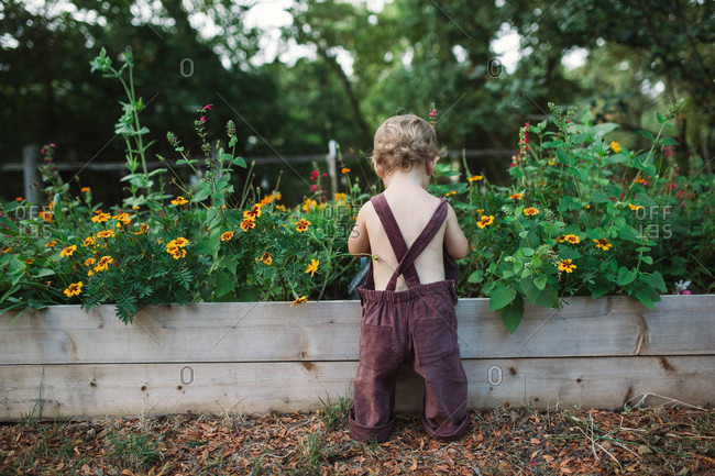 Rearview of little boy enjoying the dirt in mom's flower bed in backyard