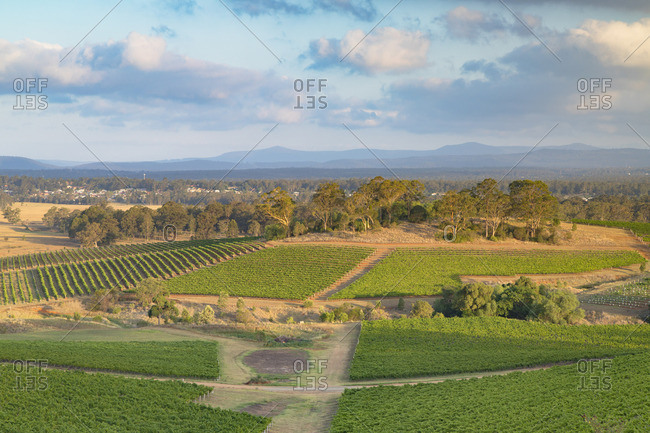 View of vineyards, Hunter Valley, New South Wales, Australia