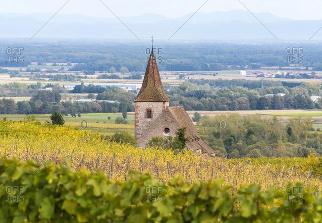 Vineyards near Ribeauville, Alsatian Wine Route, France