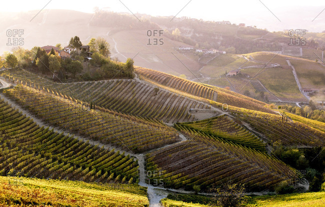 Serralunga d'Alba, Langhe, Piedmont, Italy. Autumn landscape with vineyards and hills.