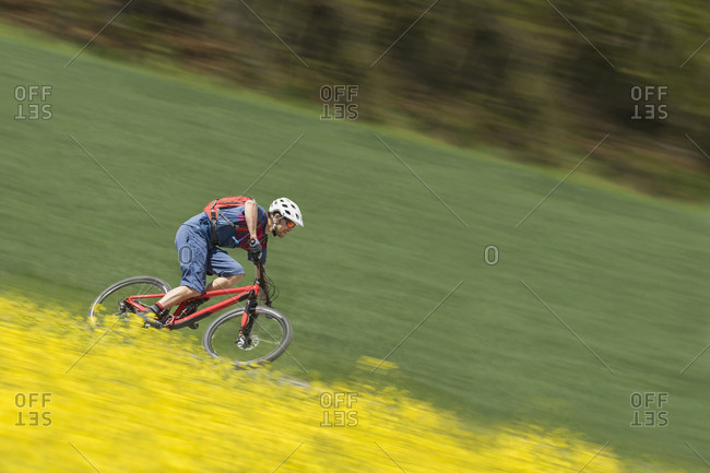 Mountainbiker rides with speed in rapeseed field, Bavaria, Germany